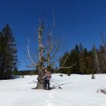 Schneeschuhtour-marz2019-bay-wald-02