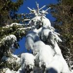 Schneeschuh-01